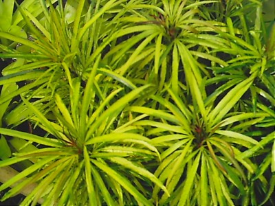 Earth Garden Amp Landscaping Philippines Plants